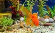 家庭养鱼,居家风水鱼缸的摆放