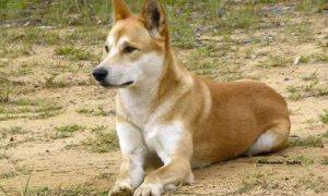 十二生肖狗的故事传说