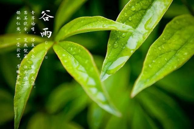 二十四节气之谷雨