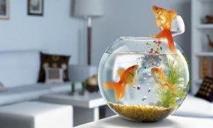 鱼缸摆放的禁忌