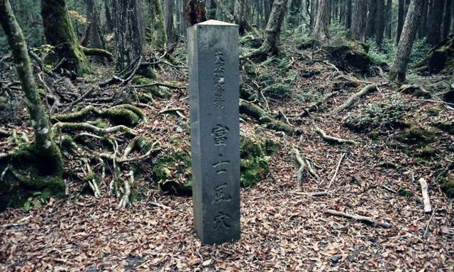 日本青木原树海